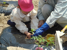 -200904野菜植え付け3