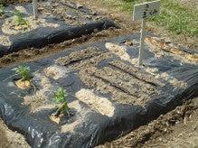 -200904野菜植え付け4