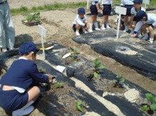 -200904野菜植え付け1