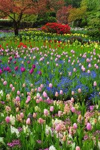 谷角 靖オフィシャルブログ「オーロラの降る街 -谷角劇場-」Powered by Ameba-tulip09
