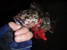 Fishing Blog OFFSHORE CRAZY! ~ 夢は一発大物!   鮪だ!鰤だ!大政だ!巨カンパだ!大鯛だ!なんでもこ~い!-カサゴ