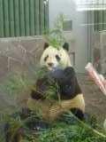 山田礼子ゼミブログ2008-パンダ