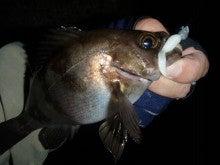 Fishing Blog OFFSHORE CRAZY! ~ 夢は一発大物!   鮪だ!鰤だ!大政だ!巨カンパだ!大鯛だ!なんでもこ~い!-ぱらまっくすで