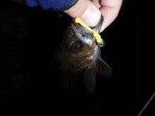 Fishing Blog OFFSHORE CRAZY! ~ 夢は一発大物!   鮪だ!鰤だ!大政だ!巨カンパだ!大鯛だ!なんでもこ~い!-めばだんご