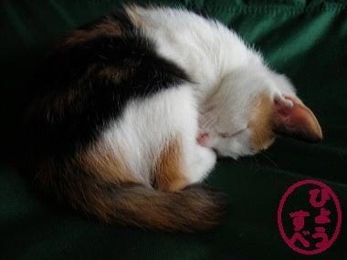 ひょうすべブログ-猫の写真7