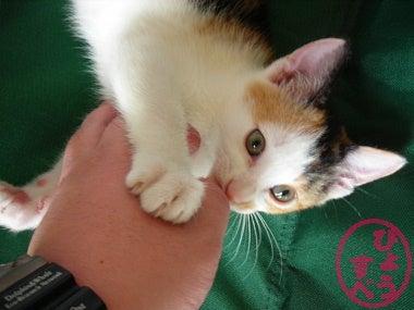 ひょうすべブログ-猫の写真2