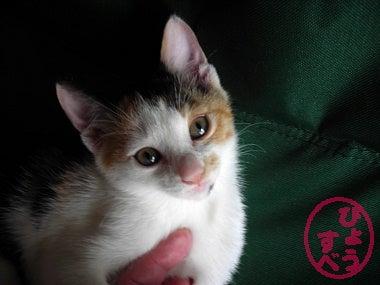 ひょうすべブログ-猫の写真3