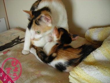 ひょうすべブログ-猫の写真11
