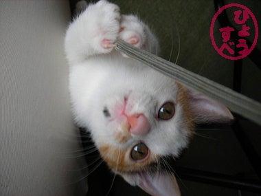 ひょうすべブログ-猫の写真1