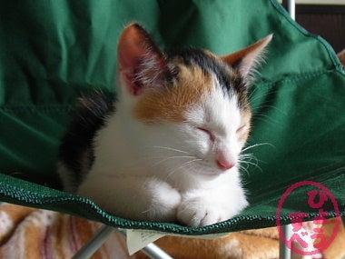 ひょうすべブログ-猫の写真4