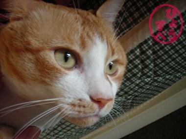 ひょうすべブログ-猫の写真6