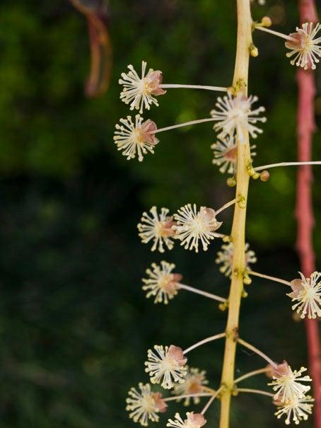 ケロケロの散歩道-クロトンの花