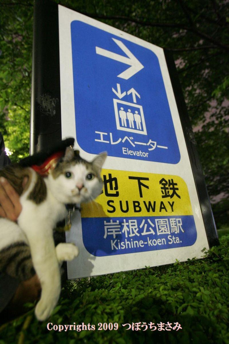 駅長猫コトラの独り言~旧 片上鉄道 吉ヶ原駅勤務~-岸根公園駅も占領したで