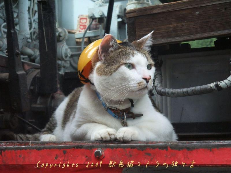 駅長猫コトラの独り言~旧 片上鉄道 吉ヶ原駅勤務~-機関車に乗ってご機嫌や