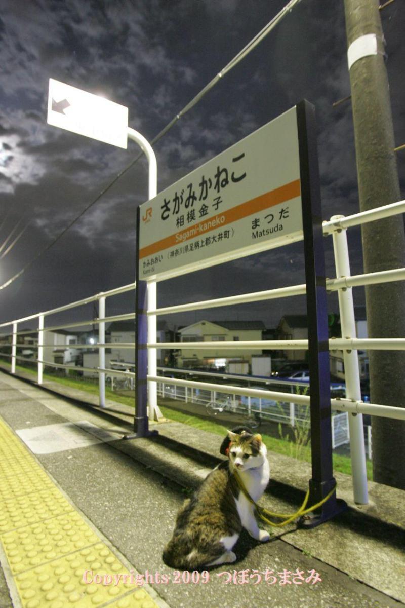 駅長猫コトラの独り言~旧 片上鉄道 吉ヶ原駅勤務~-相模金子駅を占領や