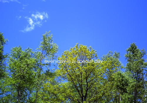 毎日がスペシャル♪-空と木