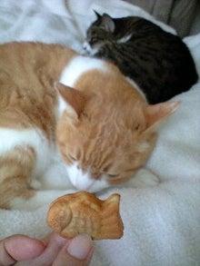 ずれずれブログ…湘南で猫と暮らせば…-090525_1531~0001.jpg