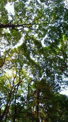 空谷の跫音-200905251620000.jpg