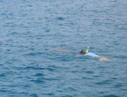 ホリデイアロハ ハワイ スタッフのブログ-dolphin04