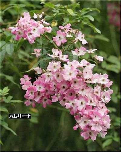 道しるべ-90530