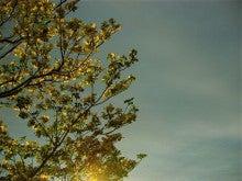 「銀の葉」-ハナミズキの頃