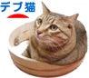 こざる生活 ~デブ猫溺愛日記~