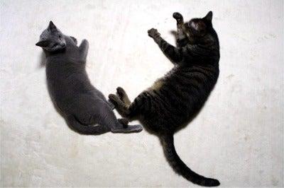 すみれ色の猫たち-fuuhana1