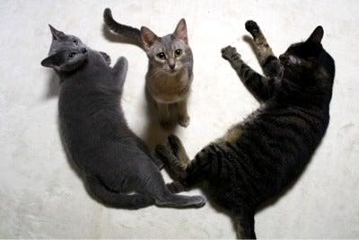 すみれ色の猫たち-fuuhanasora3