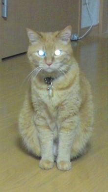 吉小路動物病院のブログ-090510_2303~01.jpg
