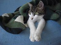 ゜'☆,。・:*:ネコ社長のわがまま生活.☆:*・゜:-・・・どうも、「社長」です。