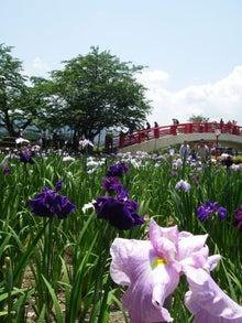 ビビのブログ-賀茂神社 菖蒲園
