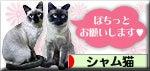シャム猫ブログ村 ボタン