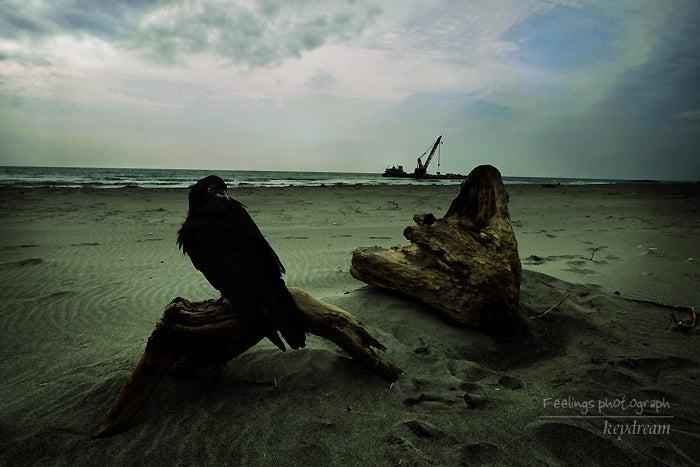 一眼レフ事始め 写真的生活-鴉の棲む浜辺