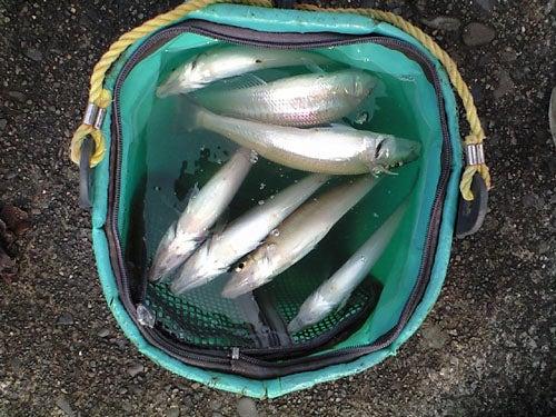 外道大王の釣行記-けっこう釣れています