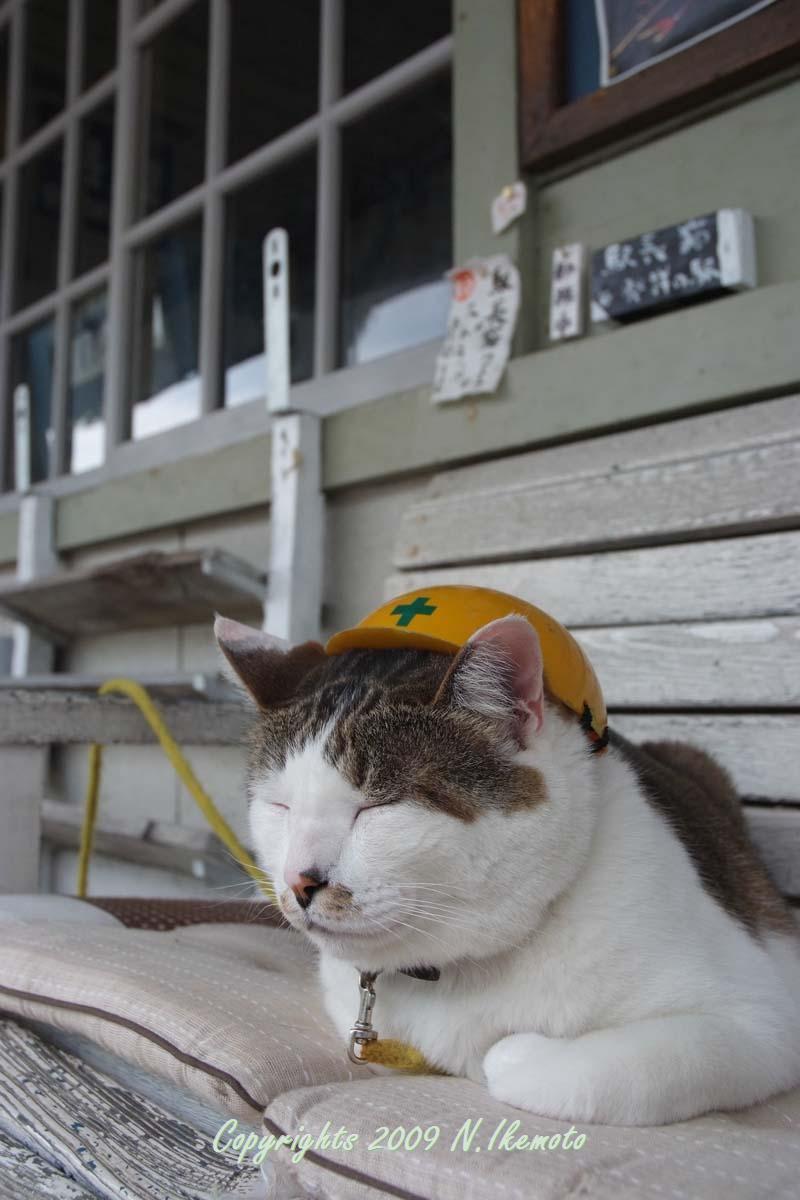 駅長猫コトラの独り言~旧 片上鉄道 吉ヶ原駅勤務~-ありがとうやで