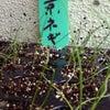 野菜畑探訪の画像