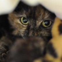 母猫の威厳