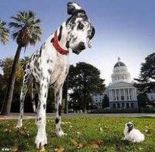 世界 一 小さい 犬