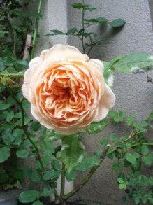 $福岡 博多区美野島 美容室 ロアール美容室      柴田 和之のブログ