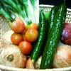 収穫ですよ~の画像