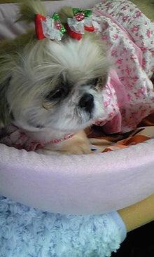 飼育放棄犬シーズー春香が教えてくれた、幸せな気持ちになる方法-090620_1524~01.jpg