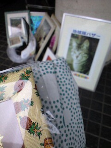 ずれずれブログ…湘南で猫と暮らせば…-CA390574-0001.JPG