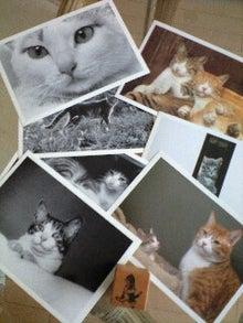 ずれずれブログ…湘南で猫と暮らせば…-090627_1529~0001.jpg