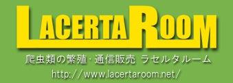 LACERTA ROOM(ラセルタルーム)