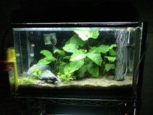 そこはかとなく熱帯魚-09062860cm