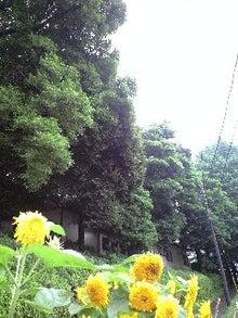 ずれずれブログ…湘南で猫と暮らせば…-090630_1108~0001.jpg