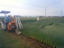 セレンディピティ.webnet -イグサの収穫風景