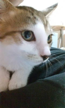 にゃんこらぼ。 -名古屋で手づくり猫ごはん--20090705005814.jpg