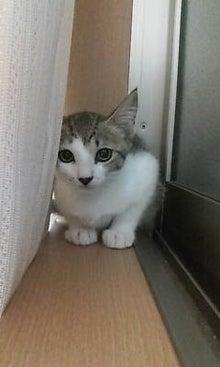 にゃんこらぼ。 -名古屋で手づくり猫ごはん--20090704210821.jpg