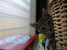 我が家のアイドル的猫